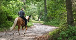 Jacksonville Baldwin Rail Trail: a Fun Day Trip from Tamaya
