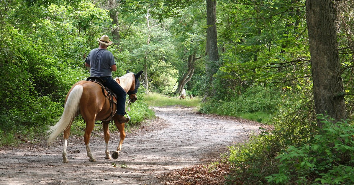 Jacksonville Baldwin Rail Trail: a Fun Day Trip from Tamaya - horsetrail